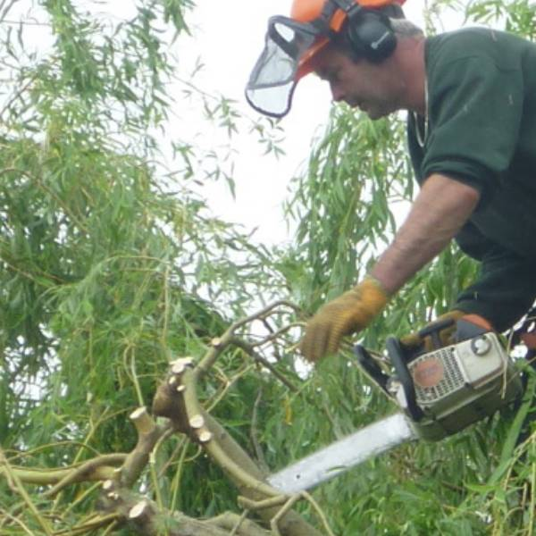 Eldridge Domestic Tree services including tree felling, stump removal and hedge cutting