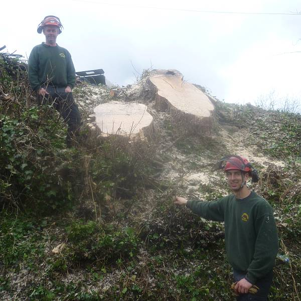 Tree maintenace and tree felling services provide by Eldridge Tree services of Gloucestershire