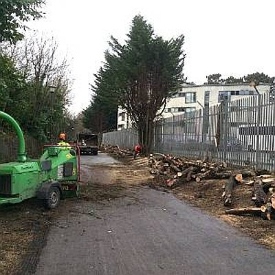 Eldridge Commercial Tree services including tree felling, stump removal and site clearance