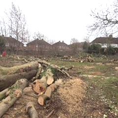 Eldrdige Tree services offer a comprehensive arboricultural site clearance service for Gloucester and Stroud