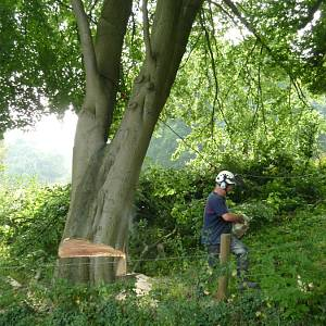 Tree removal and tree felling services for your business site or for local authorities