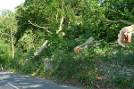 Gloucester commercial tree felling services, fully insured with professionally trained and certified staff