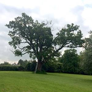 Eldridge Tree services provide emergency tree works services if you have a dangerous tree or branch that needs removal to protect the public