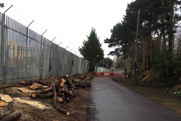 Removal of Conifer screen on the Honeybourne Cycle path, Cheltenham