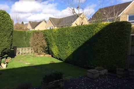 This garden conifer hedge needed to be removed for a client in Cirencester