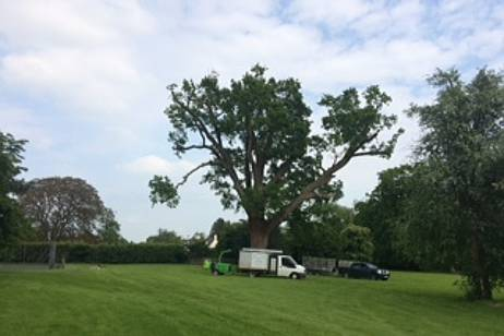 Eldridge Tree Services reduced side limbs and removed dead branches to lessen the chance of damage