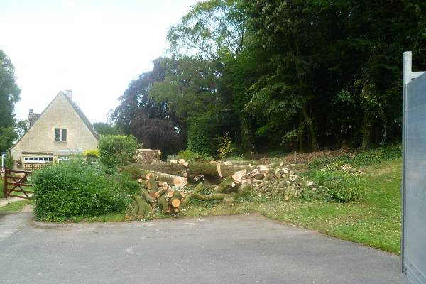 The Oak tree was eventually safely removed without damaging the nearby house