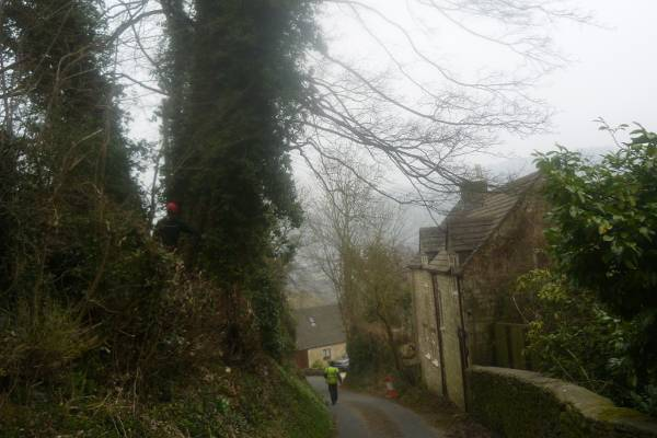 Eldridge Tree services removing a large sycamore in Nailsworth, Gloucestershire