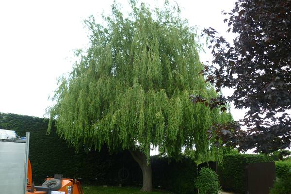 Eldridge Tree services can help maintain your garden trees, providing annual pruning and tree shaping services