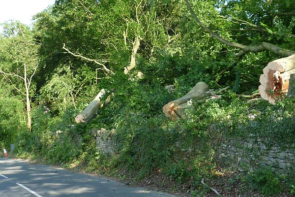 Eldridge Tree Services Arboricultural services removed dangerous and condemned trees from the road, we were given license to close the road for 3 days