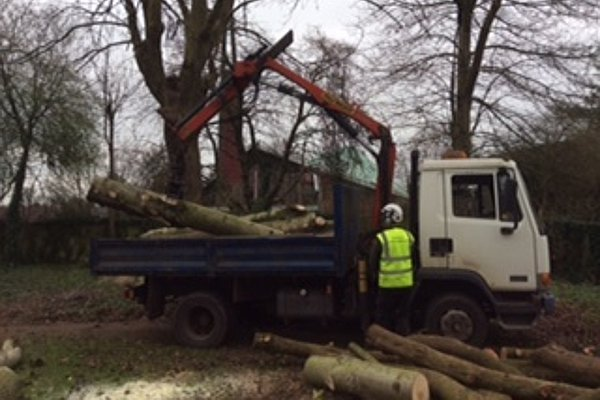 Tree clearance at a house in Gloucester before the trees were removed