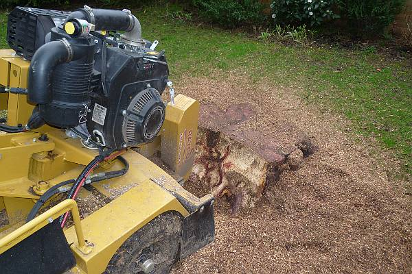 A stump grinder will make short work of your unwanted tree stumps, tidying up your garden